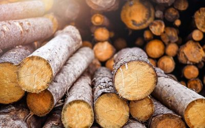 What Are the Different Types of Timber?